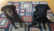 Bella and Baldo